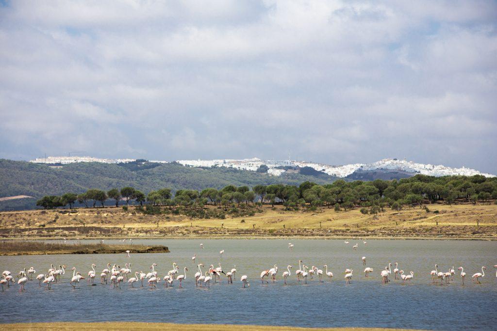 Flamingos in den Esteros