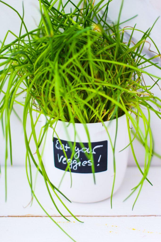 Schnittlauch im weißen Übertopf. Aufschrift Eat your Veggies